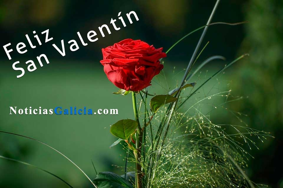 /index.php/curiosidades-en-la-red/42473/frases-de-amor