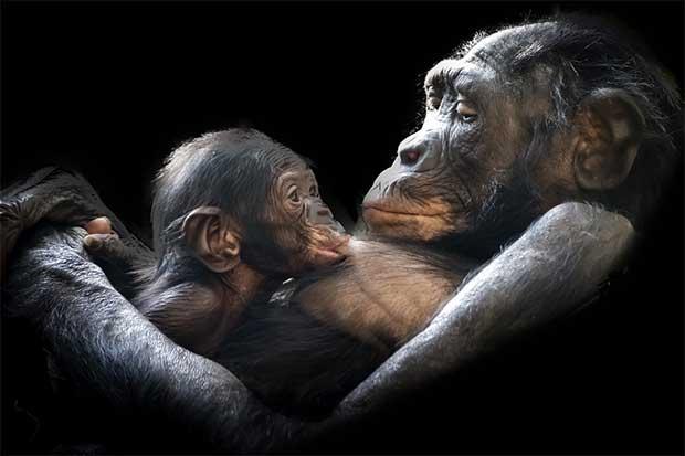 /index.php/curiosidades-en-la-red/38589/advierten-de-una-extincion-masiva-de-vertebrados