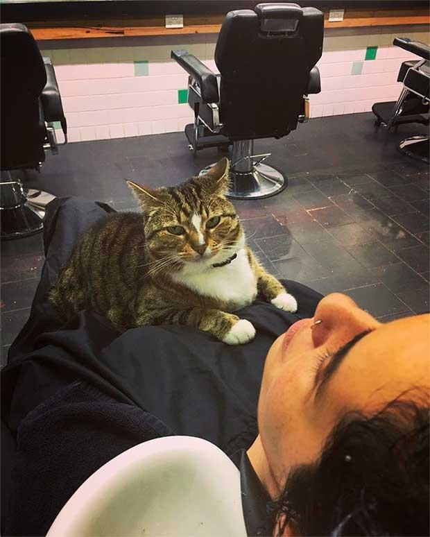 /index.php/curiosidades-en-la-red/42578/la-gata-que-trabaja-en-una-peluqueria