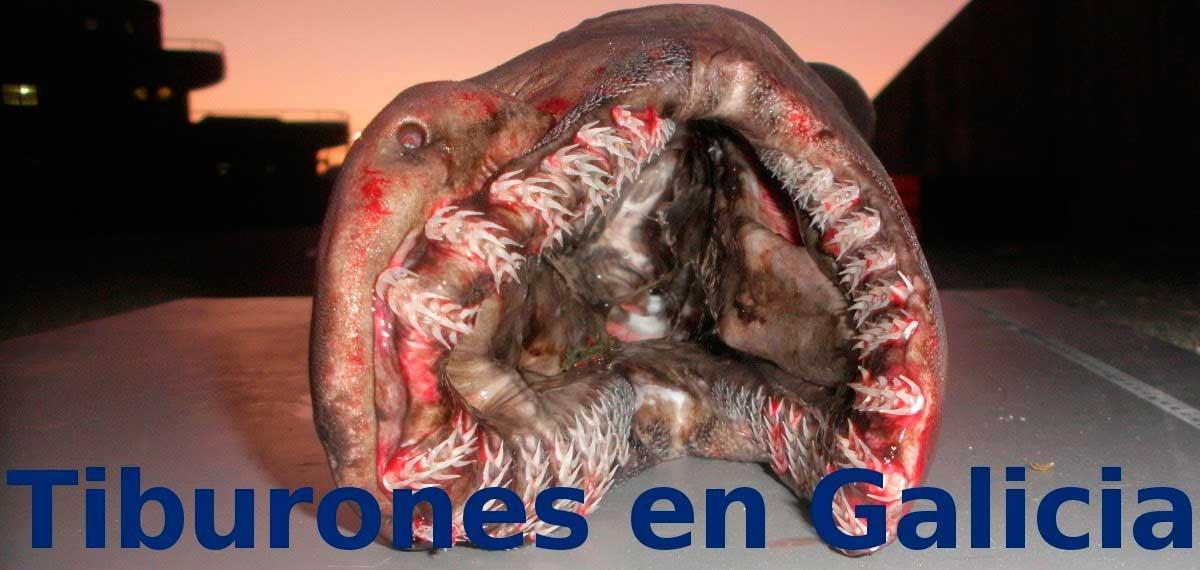 /index.php/curiosidades-en-la-red/22825/tono-mano-voz-de-tiburones-en-galicia-un-blog-de-ciencia-y-curiosidades