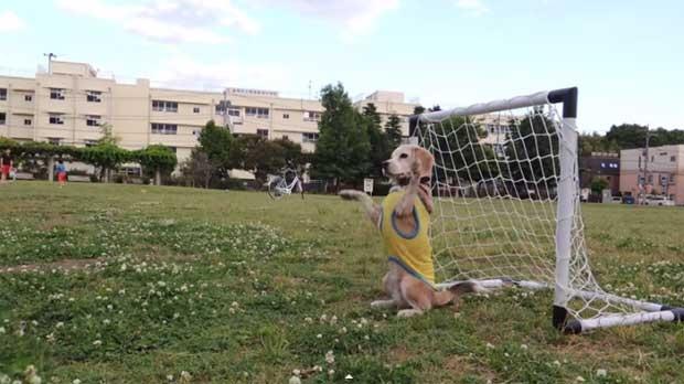 /index.php/curiosidades-en-la-red/12656/sorprendentes-habilidades-de-un-perro-jugando-al-futbol