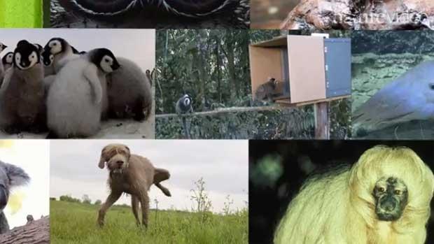 /index.php/curiosidades-en-la-red/12874/top-ten-de-los-animales-mas-adorables-de-2014-segun-la-revista-nature
